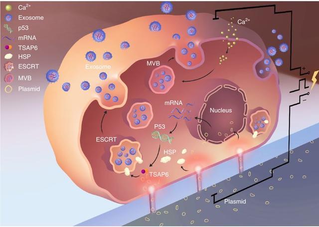 「Nature子刊」结直肠癌免疫治疗新发现:CD20+B淋巴细胞有效改善预后