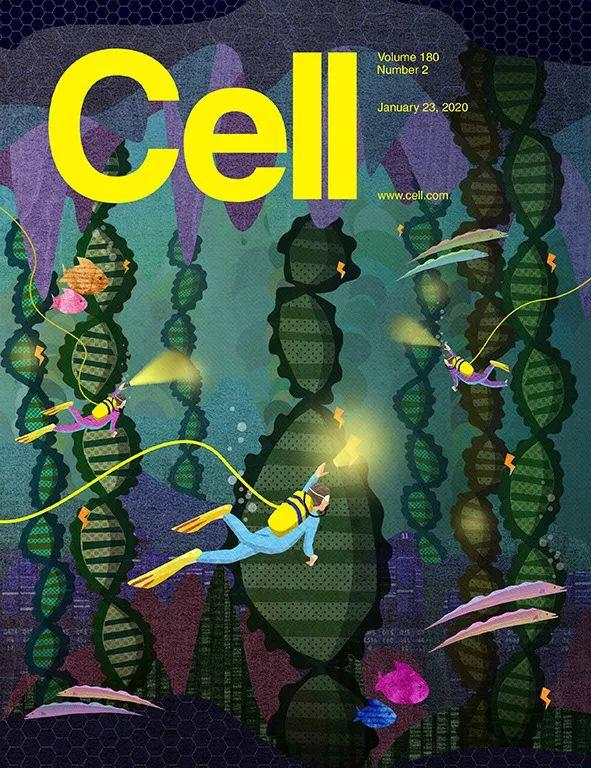《细胞》:精子这也太厉害了!科学家发现,为了保持稳定遗传,精子竟然启动最大功率扫描基因组,修复DNA | 科学大发现