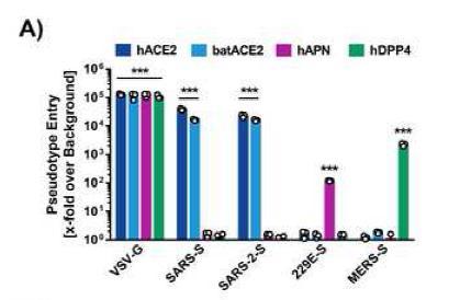 Cell抢先发布:这种蛋白酶抑制剂可能对新冠病毒有效